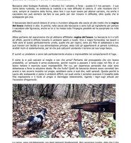 beccaccia Franchi fucile da caccia