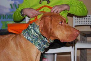 riserve di caccia cane da ferma