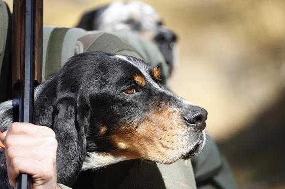 cani da caccia fucili e carabine