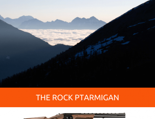 ROCK PTARMIGAN HUNTING, THE QUEEN OF THE SNOW