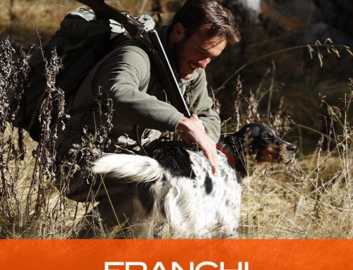 10 tips for training a hunting dog for woodcock hunting
