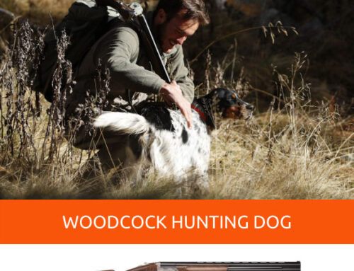 10 tips for training a dog for woodcock hunting