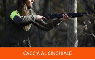 caccia al cinghiale